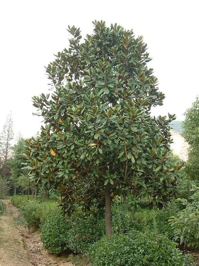 河南省潢川县卜塔集镇是全国花卉协会和国家林业局命名的全国花卉