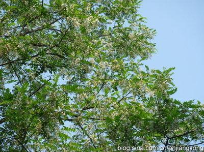 冬季结合修剪尽量剪除病芽,病梢,发病严重,冬芽带菌量高的树木,连续几