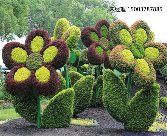 本公司主要设计制作 五色草造型,五色草种苗,植物雕塑,立体花坛,植物