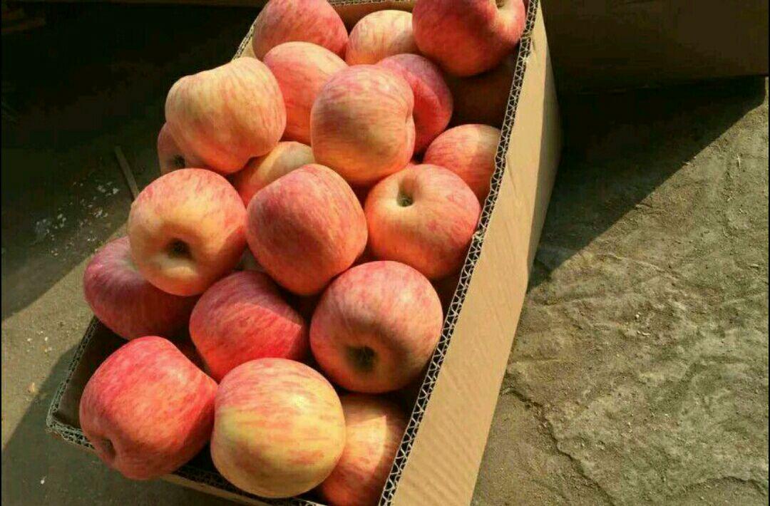 现在正值红富士苹果收获之际,货源充足,质量上乘,而且耐运适合长途