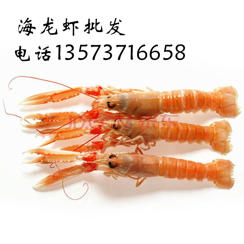 海鳌虾厂家直供 冰冻海龙虾批发