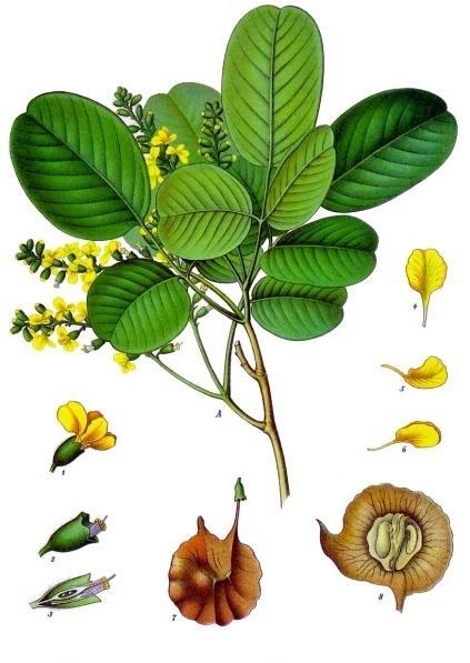与紫檀木同类的木材还有檀香木,为常绿灌木,产于我国广东,云南等地.