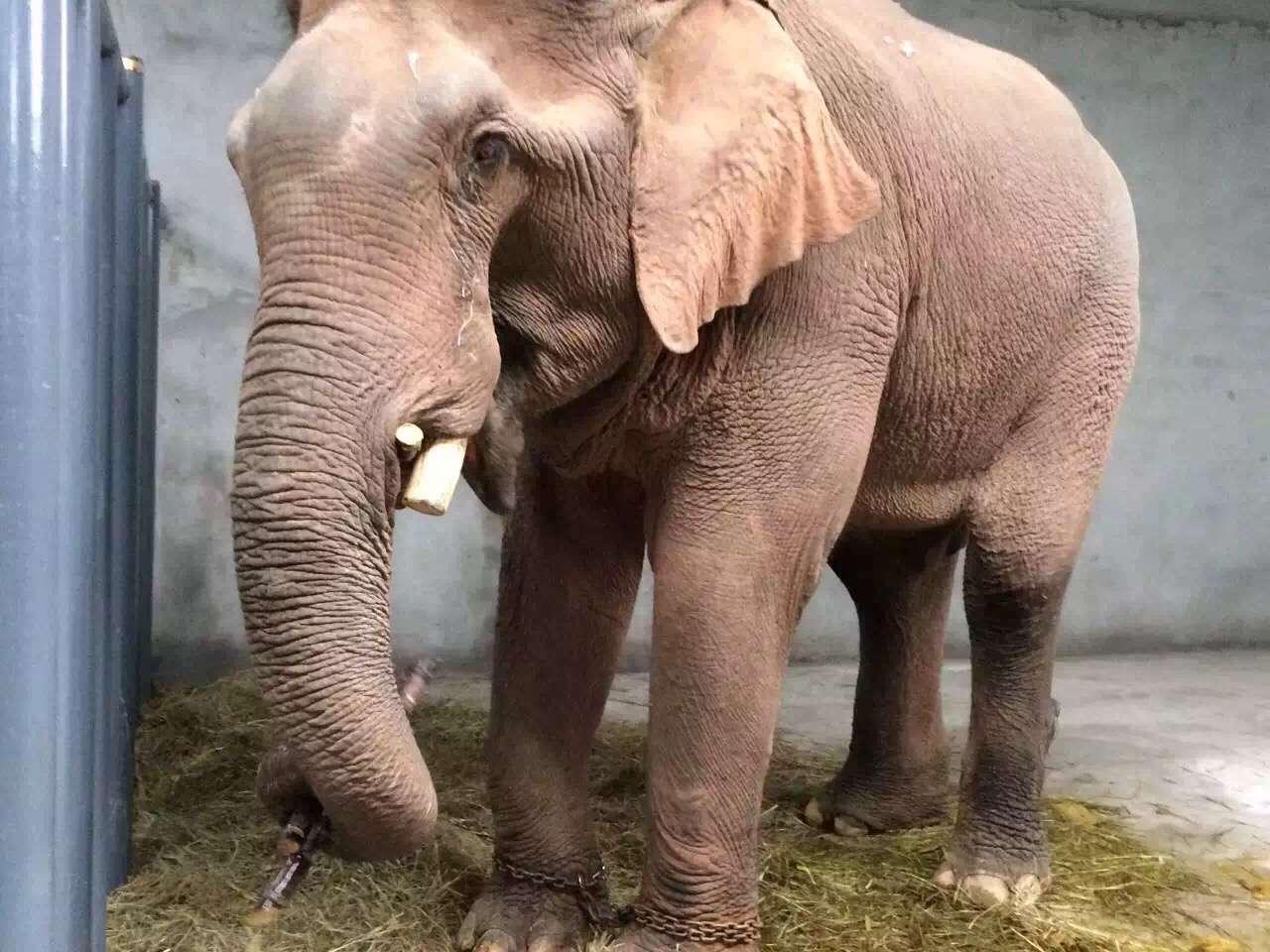 壁纸 大象 动物 1280_960