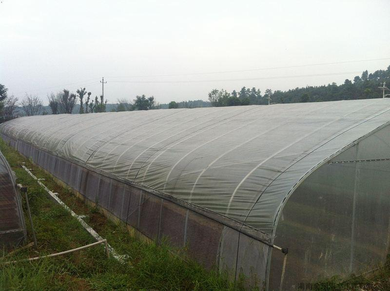 一个蔬菜大棚的长是50米,宽是10米,几个这样的蔬菜大棚的面积是1公顷图片