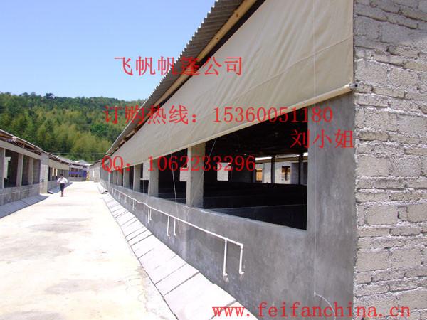 开放式基建,装配广州市飞帆帆布有限公司的猪场卷帘是现代养殖必备图片