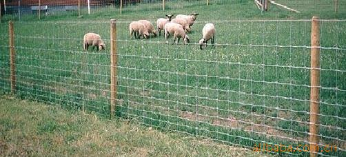 关于围网的使用方法的问题,其实许多养殖场都普遍存在,由于不了解护栏网的相关使用方法和护栏网的特性,因此选够的护栏网都没起到相应的隔离防护作用,给养殖场带来好多的麻烦,有的家禽飞过了护栏跑了,有的让猪,牛等撞坏护栏跑丢,给农场带来相应的损失。农场领导只好加派巡逻人员又给养殖场增加了不必要的费用。 *一:具体情况具体分析,护栏网可以量身定做的。不是你们看到的哪种隔离栅产品,还是用于养猪设备配套使用的护栏都可订做。根据不同的作用护栏网可以做成不同的形状规格。有的厂家在选够隔离栅时没考虑到隔离栅的的承受力。够买的