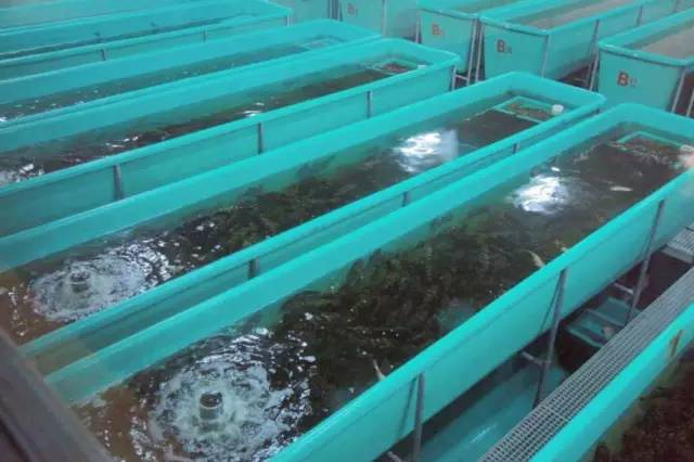 循环水养殖设备 循环水系统 室内养鱼技术 高密度养殖