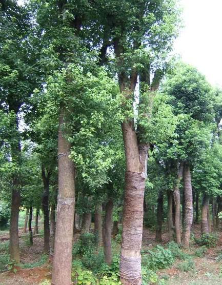 幼儿园麻绳环境布置树