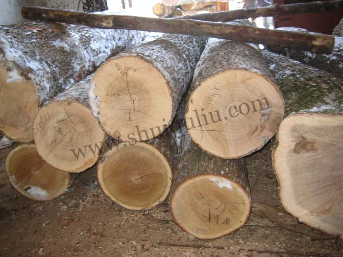 供应欧洲白蜡木原木