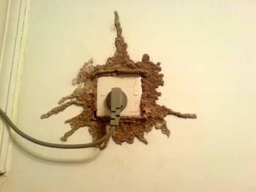 一 家庭白蚁危害的主要表现 -白蚁防治图片