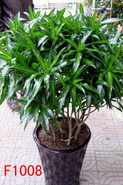 杭州植物摆放、室内花草v植物、办公室花木租售藤枝卷图片