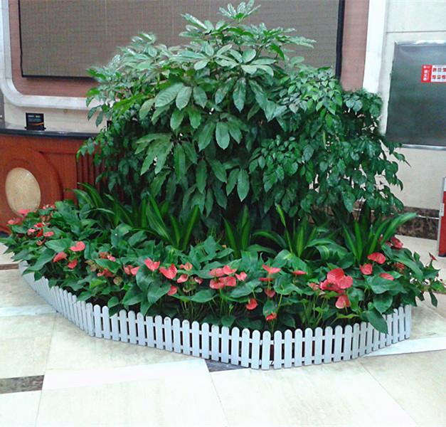 广州绿化养护 植物出租 盆栽租摆